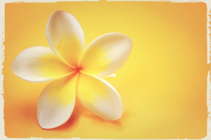 jasmine-flower